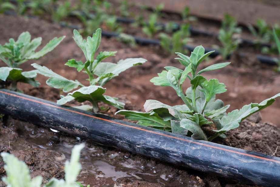 El manejo sostenible del agua y el riego: lecciones aprendidas en Argentina